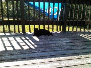 Raven kitty