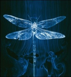 Dragonfly image source: http://www.diviningdamoiselle.com/